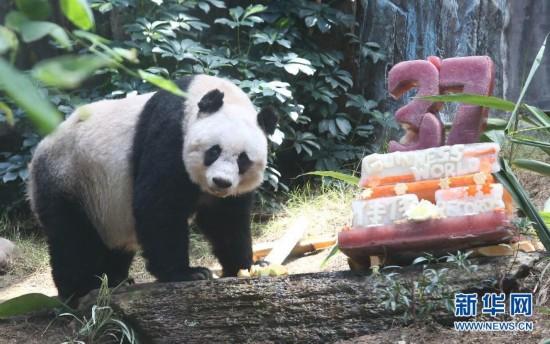 (社会)(1)香港:大熊猫佳佳刷新最长寿圈养大熊猫世界纪录