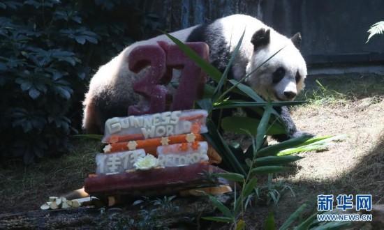 (社会)(3)香港:大熊猫佳佳刷新最长寿圈养大熊猫世界纪录