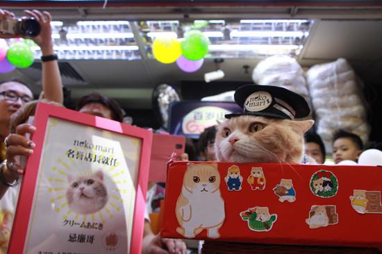 """香港名猫""""忌廉哥""""火到日本出任商店店长(图)"""