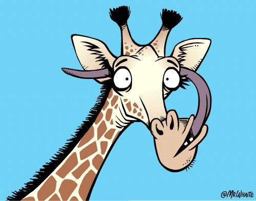 长颈鹿用舌头清洁自己的耳朵