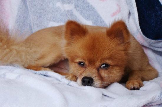 残忍:宠物狗出门惨被打死凶手竟然留条炫耀