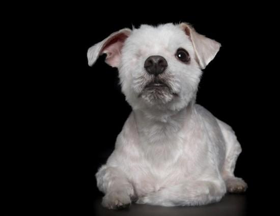 澳摄影师为残疾小动物拍暖心写真
