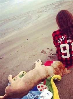 欧弟抱爱犬遗体到海边与妻子一起送其最后一程