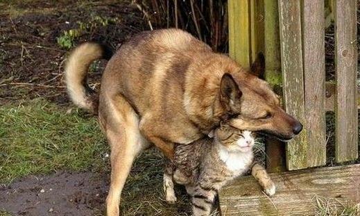小色狗和猫交配_家里的母猫第一次发情,如果没有公猫交配对她的健康会