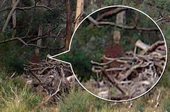 """男子在丛林拍到""""幽灵""""曾有人在该地自杀(图)"""