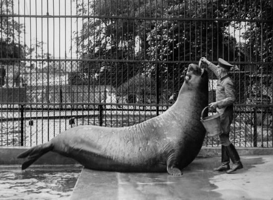 丹麦动物园拍黑白照记录动物真实生活--陕西频道--网