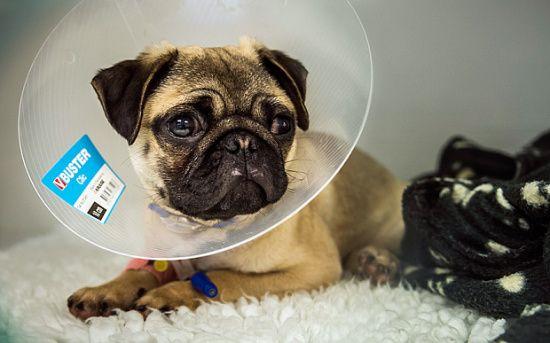英国开办首家宠物专属癌症医院配备顶尖专家