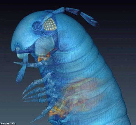 3D显像技术展示千足虫惊人细节 酷似外星生物