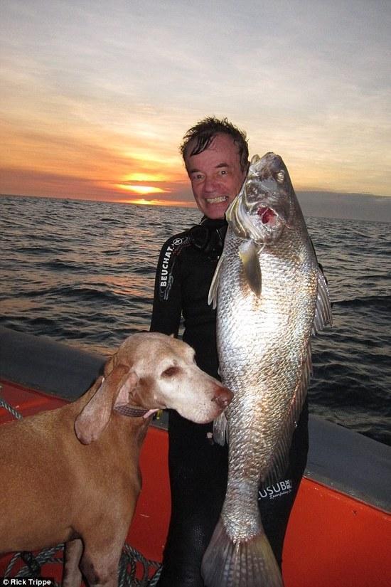 2米长海蛇和剧毒石鱼的生死战 双双中毒身亡