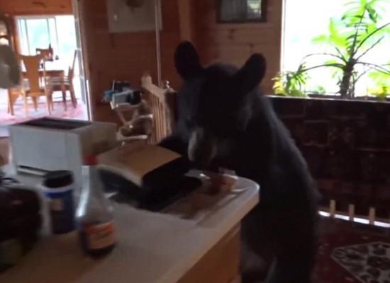 野熊闯入厨房觅食被屋主机智赶出门