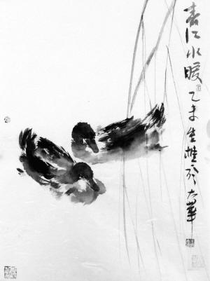 鸭子口腔结构名称