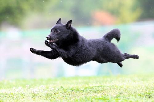"""""""飞""""起来的狗狗。"""