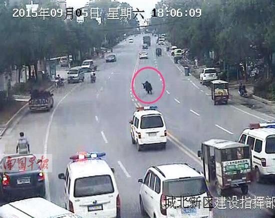 全州:牦牛在街头横冲直撞顶伤2人 武警击毙(图)