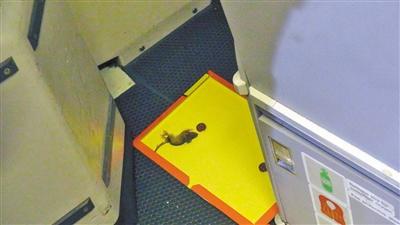 芬兰飞重庆飞机上发现活老鼠 200块粘鼠板围剿
