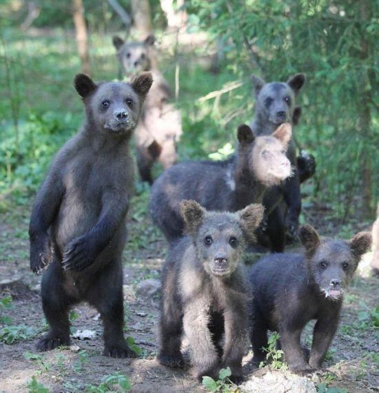 森林中隐藏的动物分享展示