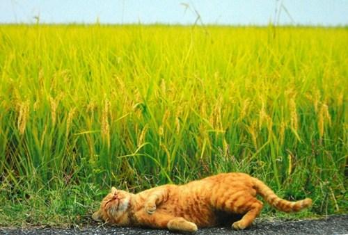 """日本""""打滚猫咪""""爆红 被赞激萌自然又暖心"""