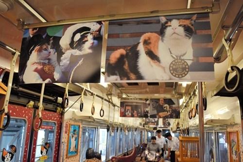 日本举办猫咪站长主题影展。