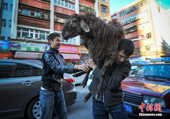 维吾尔小伙扛羊回家欢度古尔邦节