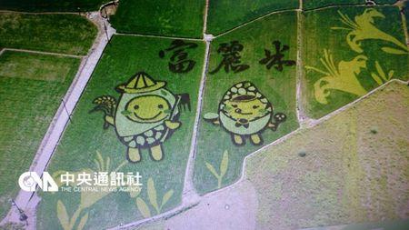 台湾花莲富里乡出现水稻彩绘卡通图案超吸睛