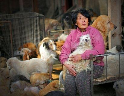 玉林救狗英雄被指骗捐