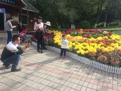 西宁野生动物园展出菊花5万余盆