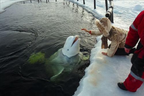 日俄首次联合对鲸类实施目视调查观测逾800头鲸