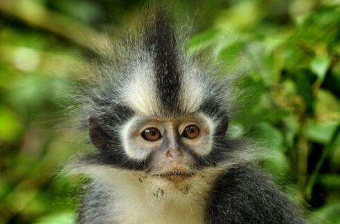 盘点奇葩的动物发型(图片来自网络)