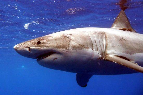 因祸得福:男子去医院治鲨鱼咬伤意外查出肿瘤