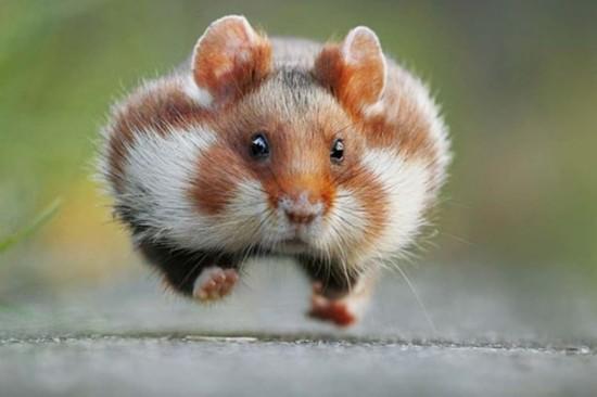 英摄影师发起动物摄影大赛记录动物爆笑瞬间