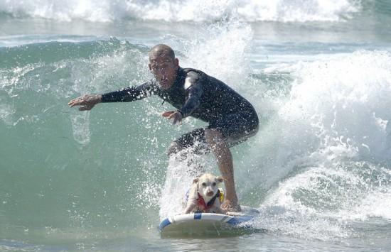 美加州举办狗狗冲浪比赛 汪星人水上一展风采