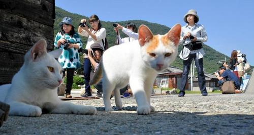 岛上的猫咪。