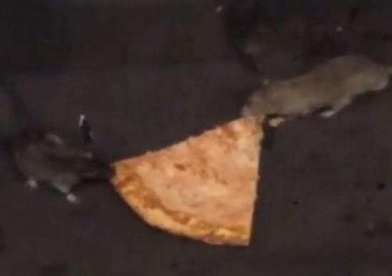纽约地铁两老鼠争夺披萨视频爆红【4】