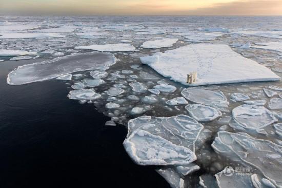 北极熊被困破碎浮冰 极地风光折射残酷现实