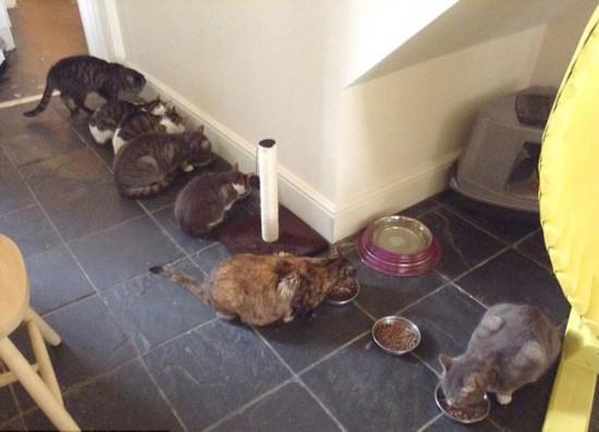 英猫咪咖啡馆因环境差被迫关闭【3】