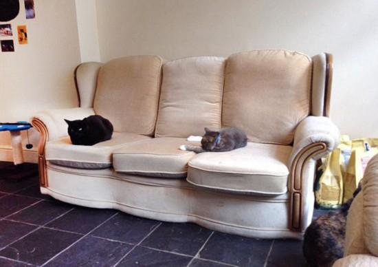 英猫咪咖啡馆因环境差被迫关闭