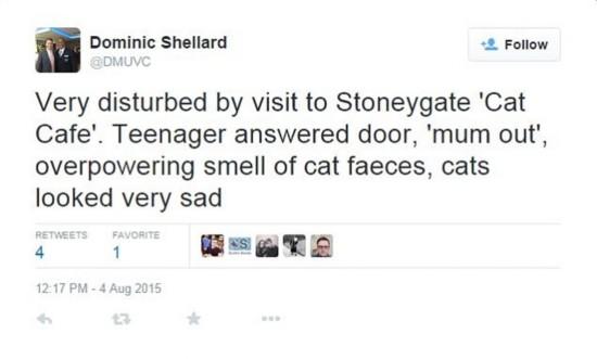 英猫咪咖啡馆因环境差被迫关闭【2】
