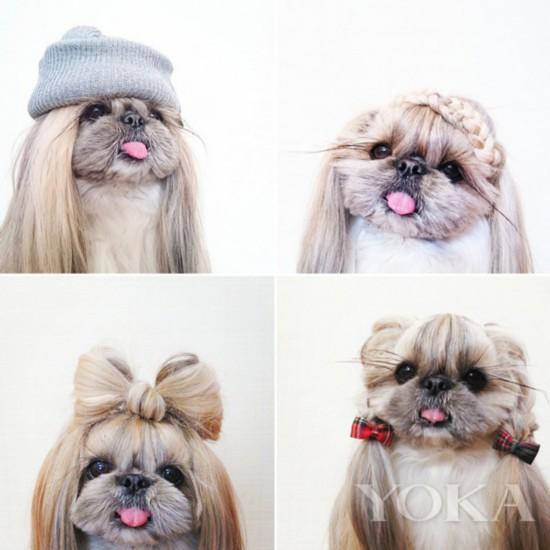 小狗每天换发型 丸子头萌的你爱不释手