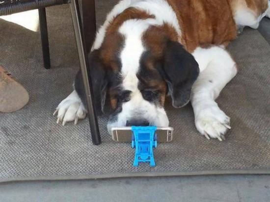 家有小犬 欢乐无限