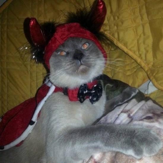 盘点萌猫的愤怒表情:惹恼喵星人 后果很严重图片
