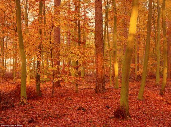 最美季节 盘点全球最美红叶
