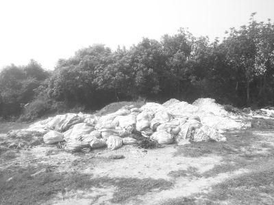 海口绿地遭建筑垃圾侵占 散发臭味滋生蚊虫
