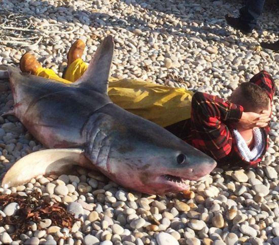 组图:英渔民抓到近两米长大鲨鱼