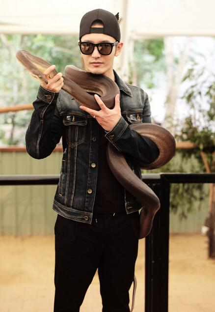黄晓明怀抱考拉黑超墨镜帅气十足 数米长巨蟒缠身吓尿