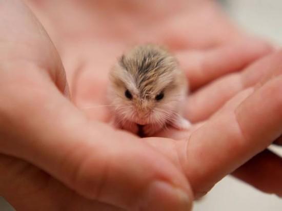 呆萌动物宝宝暖化人心--陕西频道--人民网