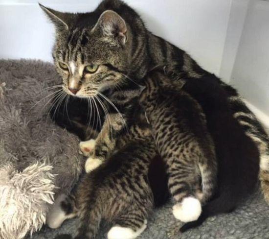 我的娃在里面:猫妈苦守宠物诊所终与幼崽团聚