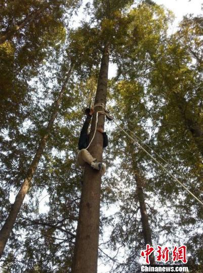 江苏一高校海选爬树高手最短用时20秒爬上8米水杉