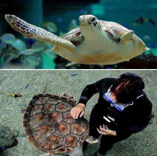 日本现坚强鸭头部中箭仍游泳 中国也有励志狗