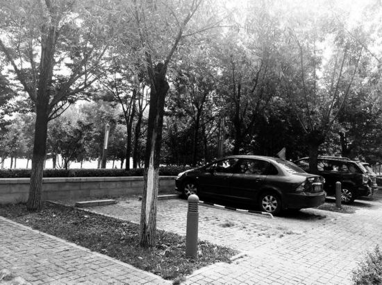 西安建成18处林荫停车场