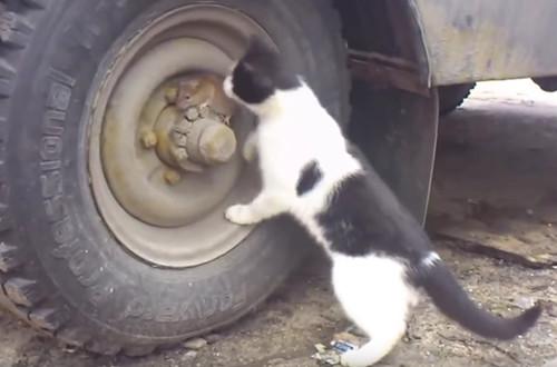 """《猫和老鼠》现实版:""""杰瑞""""功亏一篑被叼走(图)"""
