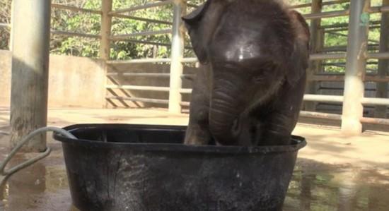 泰象宝宝洗澡时顽皮戏水萌翻众看客图片
